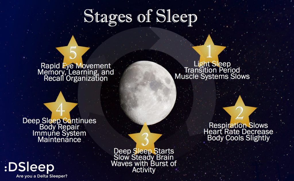 Humans Have Five Distinct Phases Of Sleep Each Phase Is Necessary And Plays An Important Role In Overall Rest And Recovery Bottom Line If You Want Better