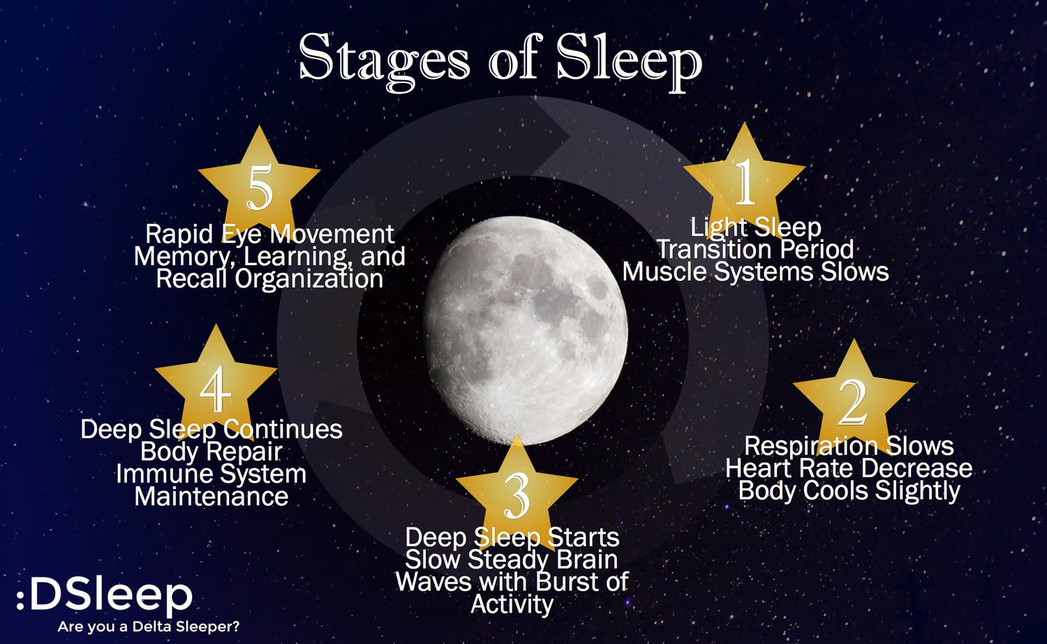 sleep cycles and stages lack of The five stages of sleep & the journey through the night  during rem sleep there is a lack of eye centering and fixation, which are essential to waking sight, but.